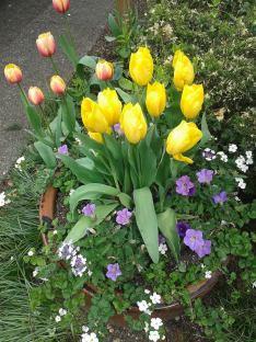 Spring at St. E